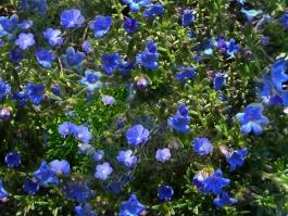 lino-blu