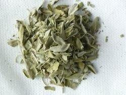 Salvia: produzione e vendita piante aromatiche
