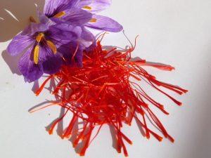 Zafferano fiori (19)